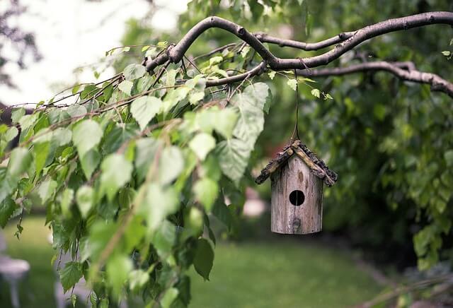 Jak zrobić karmik dla ptaków – karmik krok po kroku
