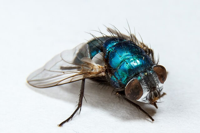 jak pozbyć się much w domu