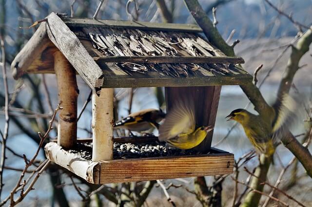 jak zbudować karmnik dla ptaków