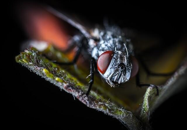 Jak walczyć z muchami? Domowe sposoby na muchy