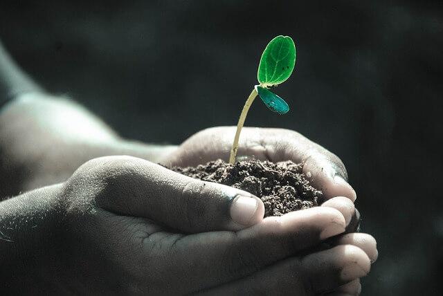 jak zmierzyć ph gleby