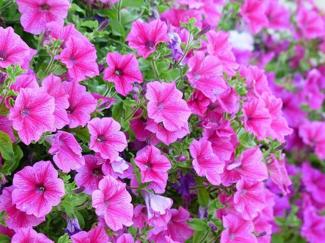 jakie kwiaty na taras