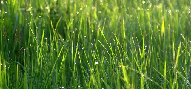 kiedy sadzić trawy ozdobne w ogrodzie