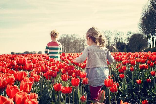 kwiaty do ogrodu wieloletnie