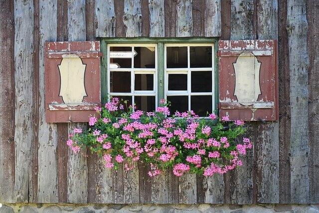 kwiaty na parapet zewnętrzny