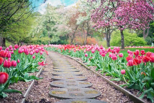 Kwiaty wieloletnie w ogrodzie źródłem szczęścia