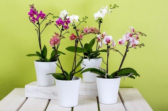 rośliny doniczkowe do sypialni