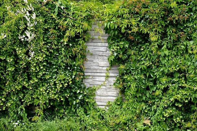 Żywopłot w ogrodzie – z czego najlepiej zrobić?