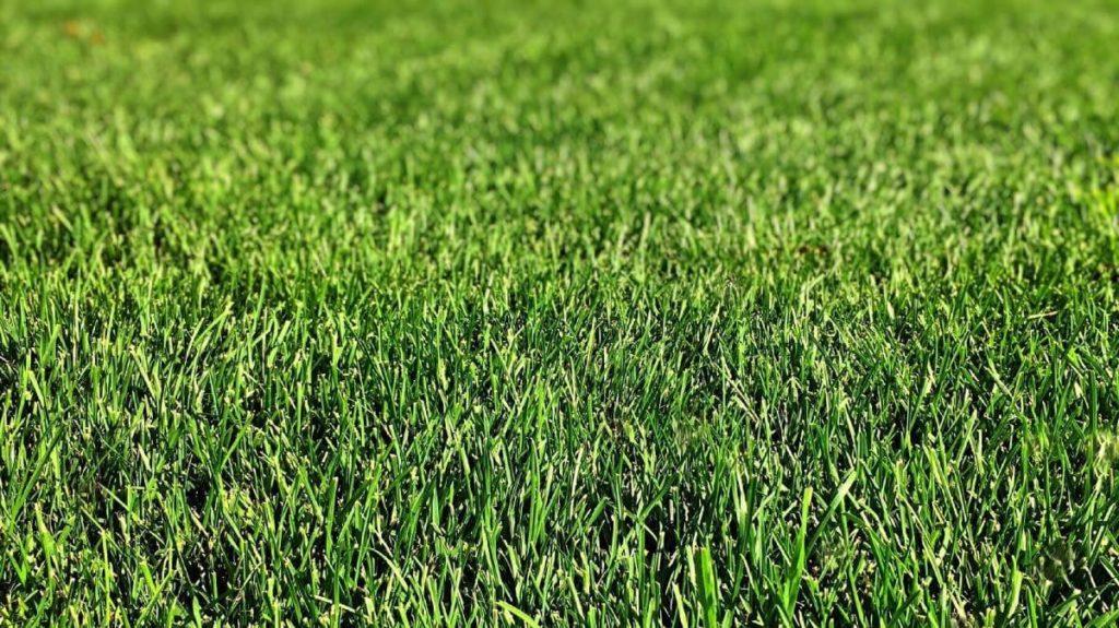 Zakładanie trawnika. Jak układać trawę z rolki?